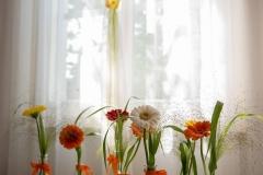 Sonnenblume (3)